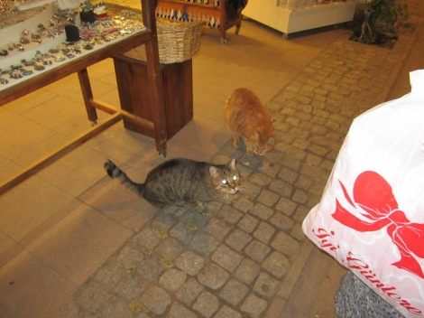 The stray cats that enjoyed my leftovers - I'm more of a dog person, but A is more of a cat person, and she made many feline friends on this trip!