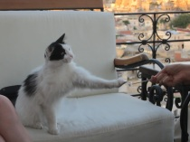 Playing with a new feline friend