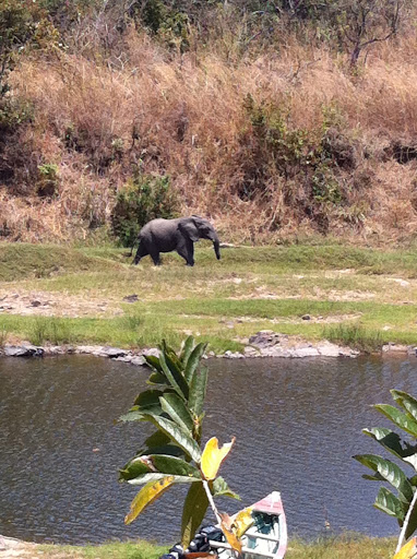 You can see the Lodge's canoe in the foreground, so you can get a sense of how close this elephant really is!