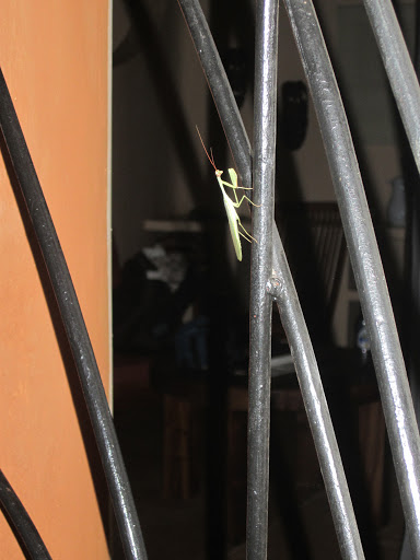 We also got to see this little guy (a praying mantis) visiting our wrought iron chalet door!